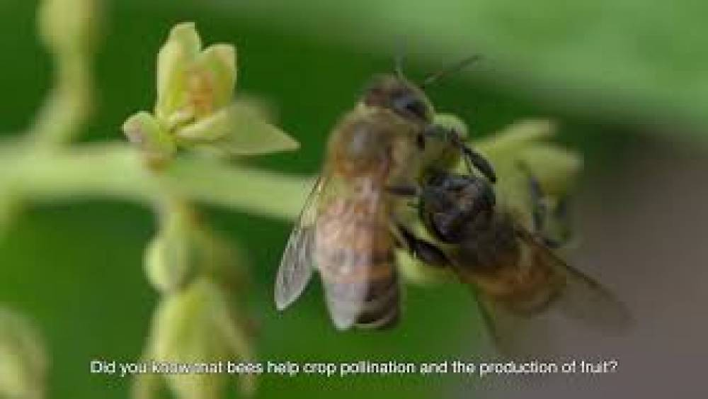 Beekeeping on fruit farms is a golden opportunity