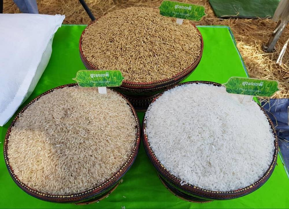 Cambodia: Hardy hybrid rice helps sow seeds of success