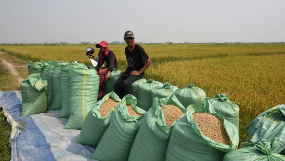 Milled-rice exports to China up 7.7%, but drop elsewhere