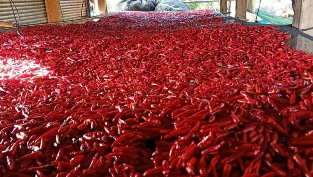 Chilli exports ratchet up a red-hot 27% in spicy 2020